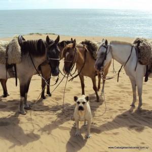 Conhecer o Uruguai a cavalo