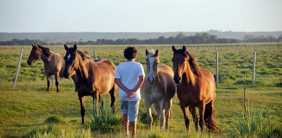 Felipe y caballos